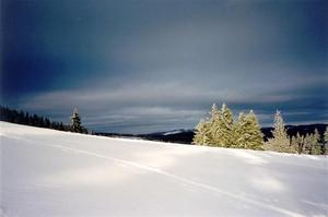 Snow covered hill and pine trees against dark blue sky