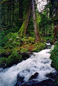 Stream inside dark green mossy forest