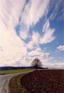 White vertical clouds above tree, path and fields