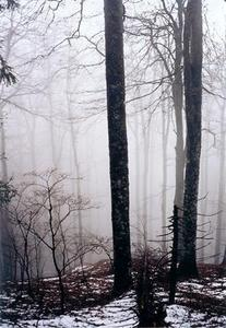 Forest taking on an eerie appearance in the mist