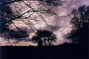 Bare darkened trees and branches against menacing clouds