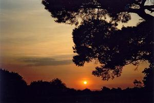 Orange sunset beyond field and pine tree