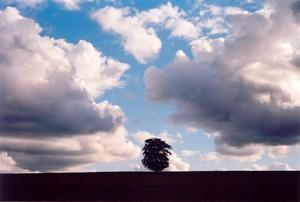 Single tree in field with two big clouds on each side