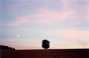 Single tree in field, moon