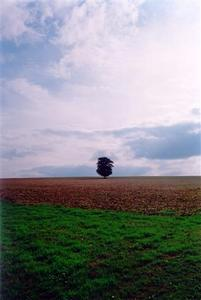 Single tree in field at dusk
