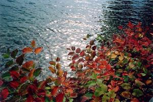 Colourful leaves in front of blue lake and sun reflection