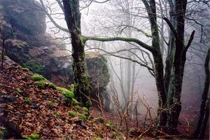 Mossy rocks and bare trees in misty forest