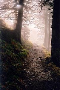 Stony and 'rooty' path between trees in the mist