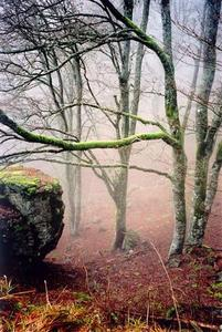 light mist behing bare trees and boulder