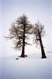 Two bare trees leaning against each other