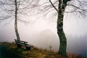 Bench and two trees facing mist in valley
