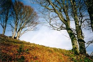 trees on hill