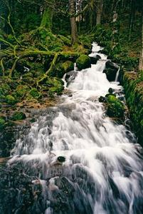 Rapid stream flowing over mossy rocks through forest