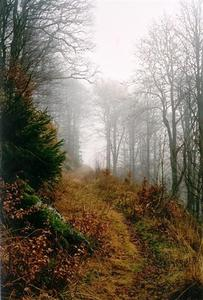 Path through misty forest