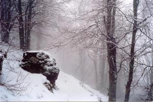 Rock and trees under snow and mist