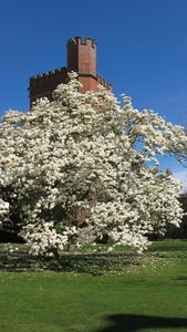 Magnolia in front of Brockwood tower