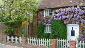 Cottage wisteria