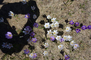 Shadowed flowers
