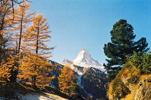 The Matterhorn with Larches