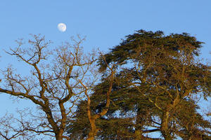 Moon over Brockwood