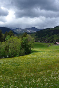 Swiss meadow