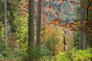 Colourful Black Forest