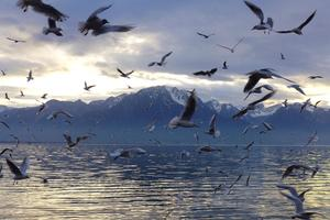 On Lake Geneva at Montreux
