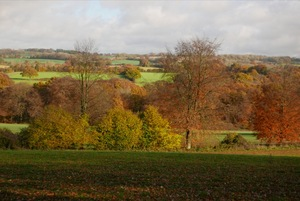 November fields near Brockwood