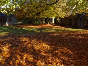 Autumn at the Centre