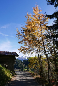 On the upper way to Saanen
