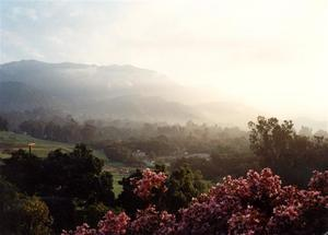 Hazy sunrise light on the Valley, pink azalea in the foreground