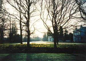 North side of School, daffodils in morning light